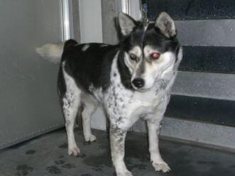 下越動物保護管理センターの迷い犬