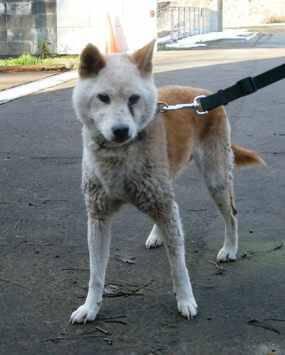 中越動物保護管理センターの迷い犬