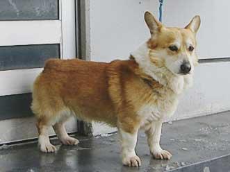 迷い犬 No.101