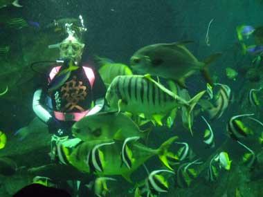 上越市水族博物館のダイバー