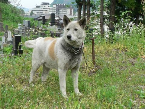 魚沼動物保護管理センター迷い犬2009/5/12-1