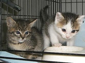 下越動物保護管理センター-2009/6/16-6