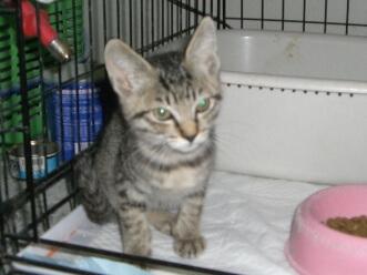 下越動物保護管理センター-2009/6/16-2