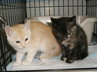 下越動物保護管理センター-2009/6/16-1