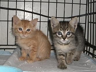 下越動物保護管理センター-2009/6/10-1