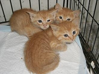 下越動物保護管理センター-2009/6/2-2
