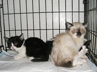 下越動物保護管理センター-2009/6/2-4