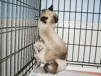 下越動物保護管理センター-2009/6/2-5