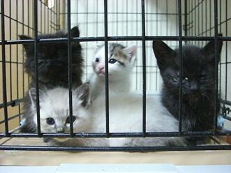 下越動物保護管理センター-2009/6/2-1