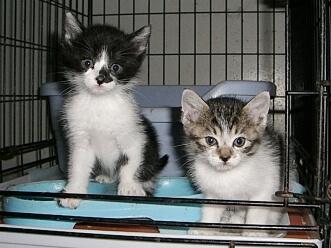 下越動物保護管理センター-2009/6/10-9