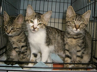 下越動物保護管理センター-2009/6/16-5
