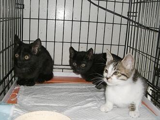 下越動物保護管理センター-2009/6/10-2