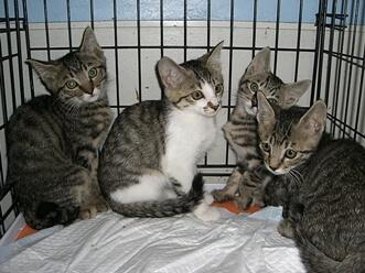 下越動物保護管理センター-2009/6/10-3
