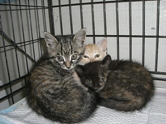 下越動物保護管理センター-2009/6/10-4