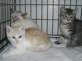 下越動物保護管理センター-2009/6/16-3