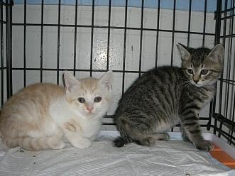 下越動物保護管理センター-2009/6/10-8