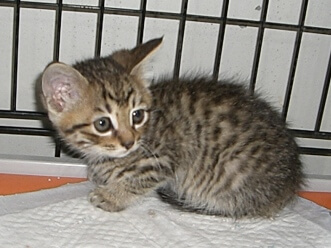 下越動物保護管理センター-2009/6/10-5