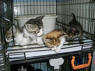 下越動物保護管理センター-2009/6/10-10