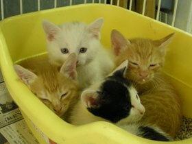 中越動物保護管理センター-2009/6/9-1