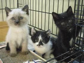 中越動物保護管理センター-2009/6/9-2