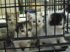中越動物保護管理センター-2009/6/9-3
