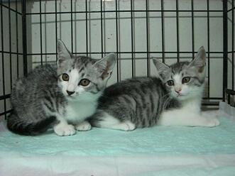 下越動物保護管理センター-2009/7/23-3