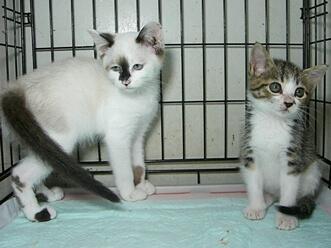 下越動物保護管理センター-2009/7/13-3