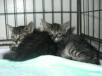 下越動物保護管理センター-2009/7/13-2