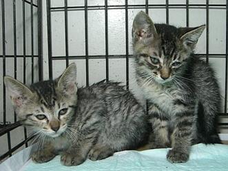 下越動物保護管理センター-2009/7/13-1