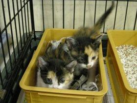 中越動物保護管理センター-2009/7/27-2