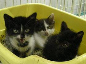 中越動物保護管理センター-2009/7/27-1