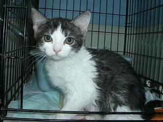 下越動物保護管理センター-2009/8/4-4