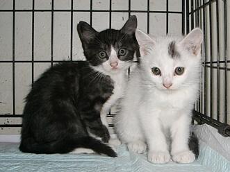下越動物保護管理センター-2009/8/4-3