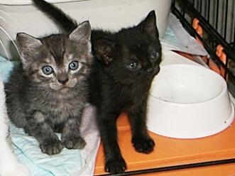 下越動物保護管理センター-2009/8/11-7