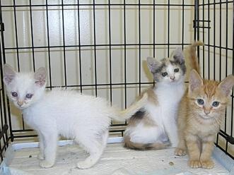 下越動物保護管理センター-2009/8/4-2
