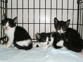 下越動物保護管理センター-2009/8/4-1