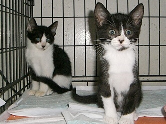 下越動物保護管理センター-2009/8/11-2
