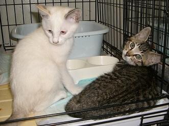 下越動物保護管理センター-2009/8/11-4