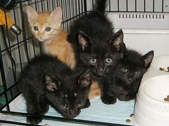 下越動物保護管理センター-2009/8/11-1