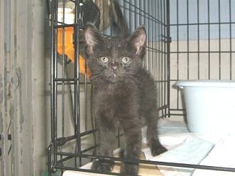下越動物保護管理センター-2009/8/31-1
