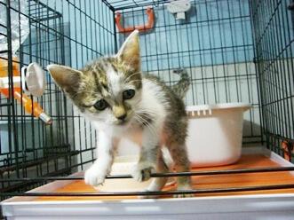 下越動物保護管理センター-2009/8/31-2