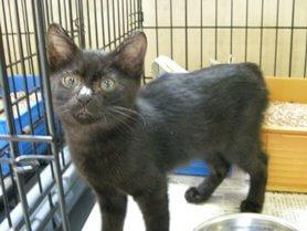 中越動物保護管理センター、子猫の里親募集情報-2009/8/25-2