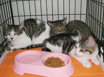 下越動物保護管理センター-2009/09/19-2