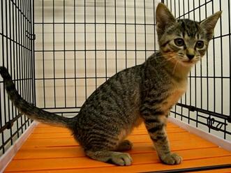 下越動物保護管理センター-2009/09/09-2