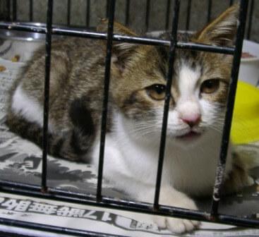 県央動物保護管理センター-2009/09/10-6