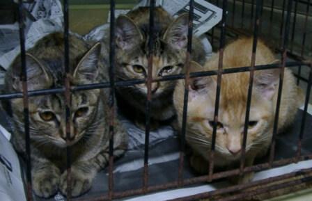 県央動物保護管理センター-2009/09/10-3