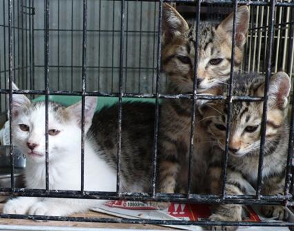 県央動物保護管理センター-2009/09/10-4