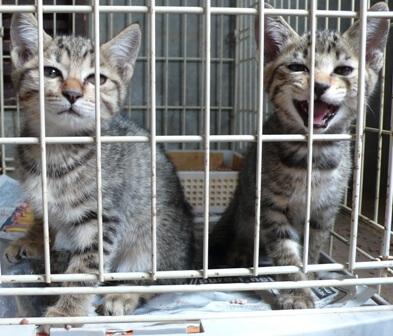 県央動物保護管理センター-2009/09/10-5