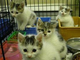 中越動物保護管理センター-2009/09/25-2