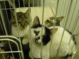 中越動物保護管理センター-2009/10/27